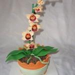 orchidej 3