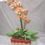 Orchidej žilkovaná